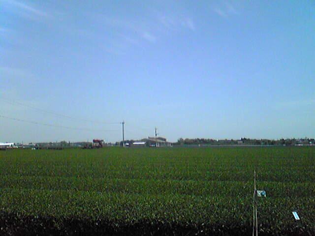 庭からの風景1.jpg