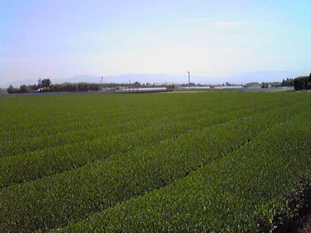 庭からの風景2.jpg